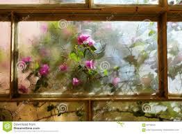 flowering bougainvillea ornamental climbing plant stock photo