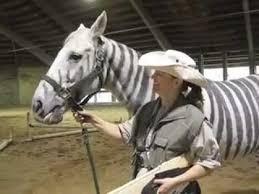 Halloween Costumes Zebra Zebra Horse Zorse Wins Halloween Costume Parade