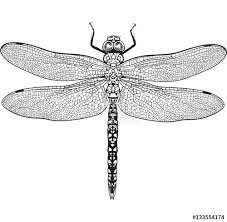 top view of blue dragonfly with transparent wings sketch