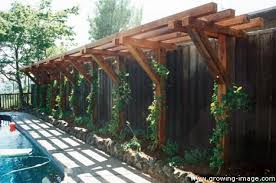 Trellis Structures Pergolas Carpentry Arbors And Fences For Landscaping Growing Image
