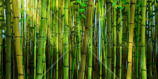 bamboo forest wall mural photo wallpaper photowall bamboo forest