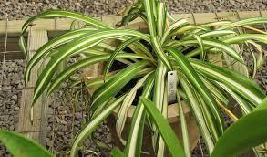the best low maintenance pet friendly houseplants