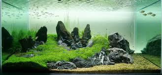Aquascaping Rocks Go Zen With An Iwagumi Aquarium Rock Garden Fpsbutest