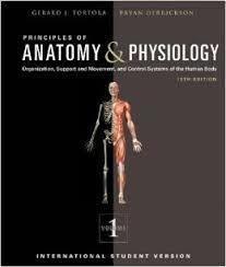 Holes Human Anatomy And Physiology 13th Edition Holes Anatomy And Physiology 13th Edition Pdf Inspiring Human