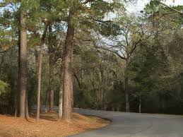 houston tree pollen worst in the nation houston heights tx patch