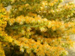how to air dry flowers grasses and foliage sow and so
