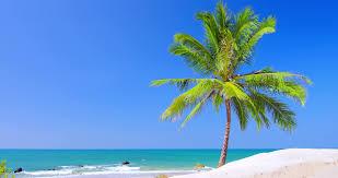 idyllic coast of tropical island with palm tree and