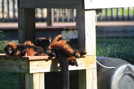 capron park zoo home