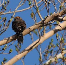 file bird in a tree 8743617900 jpg wikimedia commons