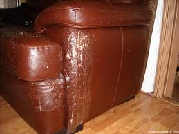 Repair Scratches On Leather Sofa Prevent Cats From Scratching Leather Sofa 1025theparty