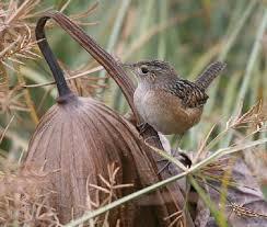 Oklahoma birds images Wild birds for the 21st century jpg
