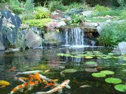 Backyard Pond Supplies by Backyard Pond Supplies Rochester New York National Service Large