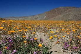anza borrego anza borrego desert state park cing