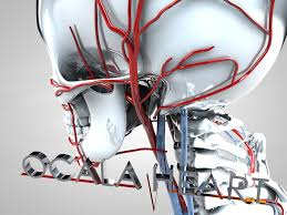 Human Anatomy Careers Careers At Ocala Heart Institute Ocala Heart Institute In Ocala