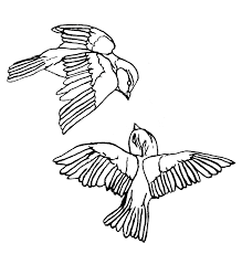 bird drawings for tattoos