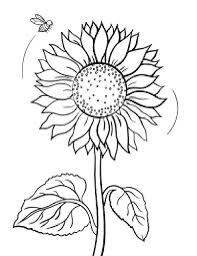 Nice Sunflowers Coloring Pages Cool And Best C 1731 Unknown Sunflower Coloring Page