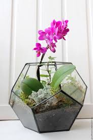 buy the floriana geometric phalaenopsis orchid moss and heteroj