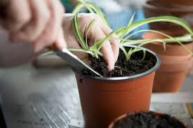 how to root plants from cuttings