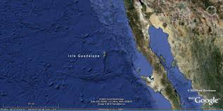 Guadalupe Mexico Map by Isla Guadalupe