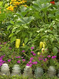 10 Tips For Growing Peppers by 10 Tips For Companion Planting