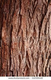 bark tree texture frame nature stock photo 112335149