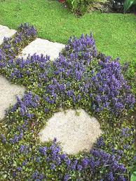 Backyard Ground Cover Options 188 Best Ground Cover Plants Images On Pinterest Gardening