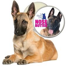 belgian sheepdog allergies belgian malinois nose butter natural balm for your dog u0027s dry nose