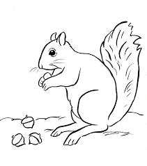 squirrel coloring page squirrel coloring page samantha bell