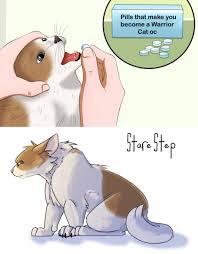 Cat Memes Tumblr - warrior cat meme tumblr