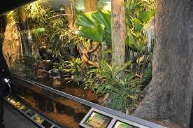 large terrarium decor u2013 outdoor decorations