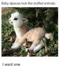 I Want A Baby Meme - baby alpacas look like stuffed animals i want one animals meme