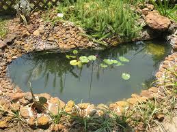 water garden how to build a backyard water garden earths natural