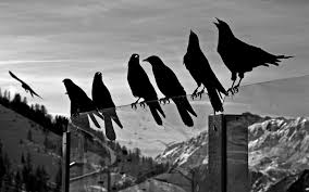 black and white bird wallpapers 43 wallpapers u2013 adorable wallpapers