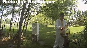 suburban beekeeper an introduction to a backyard hive youtube