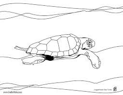 original sea shells coloring pages known different article