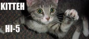 Hi5 Meme - kitten hi5 cat meme cat planet cat planet