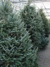 balsam christmas tree decorating beautiful balsam hill christmas trees for inspiring