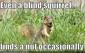 Squirrel Nuts Meme - even a blind squirrel finds a nut occasionally cheezburger