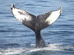 Whale by Justin Kan U0027s Video Q U0026a App Whale Gets Tinder Style Swipes In Major