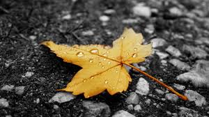1920x1080 fall wallpaper download wallpaper 1920x1080 autumn rain drops leaves flowers