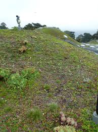 49 best california native plants the living roof a failed experiment in native plant gardening
