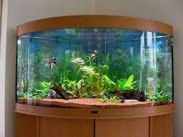 beautiful home aquariums on exclusive aquarium design home