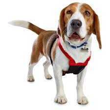 guide dog harness good2go red no pull dog harness petco
