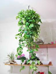 best low light house plants low light best plants porch simply swider the tropical hanging