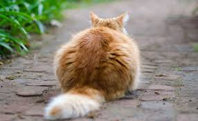 Keep Cats In Backyard What To Do If You Find A Stray Cat In Your Backyard Modkat