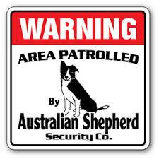 australian shepherd funny australian shepherd security sign area patrolled funny dog