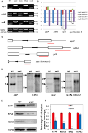 frontiers white stripe leaf4 encodes a novel p type ppr protein