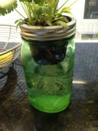 hydro veggie grow diy wicked self watering mason jar planters use