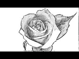 how to draw a beautiful open rose with shading youtube