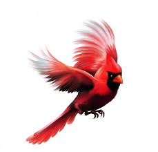 best 25 cardinal tattoos ideas on pinterest red cardinal